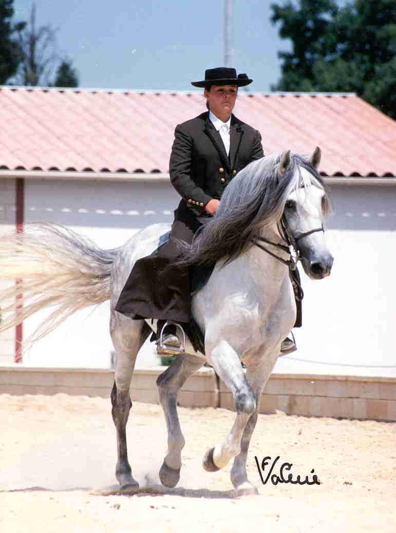 Mci masters du cheval iberique - Salon du cheval montpellier ...